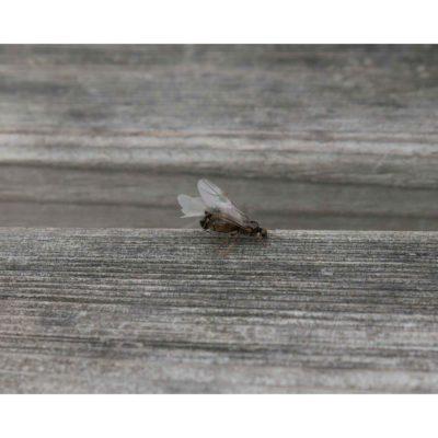 Arthropods – Steyning, England, Ants (2016)