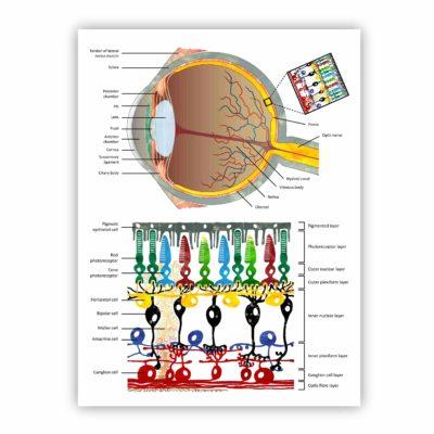 Digital – Eye & Retina