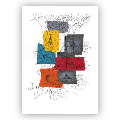 A4 print of Cortical neurons & interneurons 01